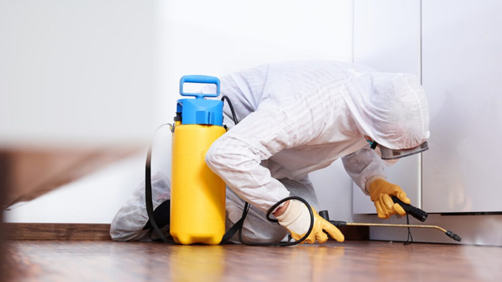 Top Reasons Professional Pest Control Services In Boise Is A Necessity Not Luxury